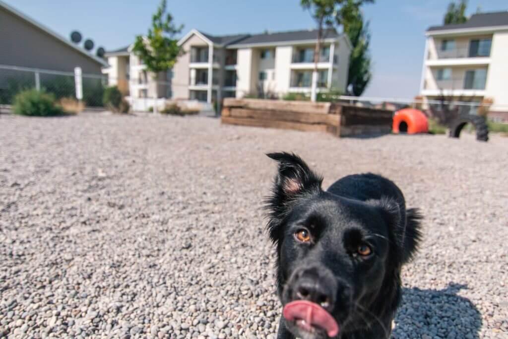 Dog Park For Pets